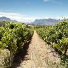 wedgeview-country-house-and-spa-stellenbosch-view-2